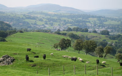 BSAS Precision Livestock Farming Webinars